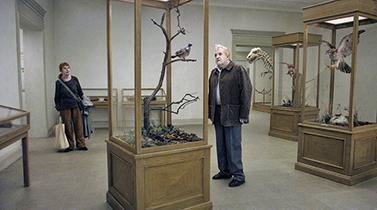 Um pombo pousou num ramo a refletir na existência (FEST cineclube)